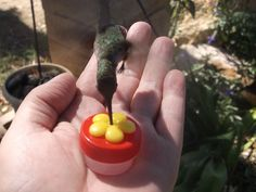 HUMMINGBIRD FEEDER *Hand Held*  Have them drinking from your hand in minutes !