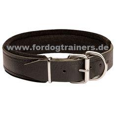 Lederhalsband für Deutschen Schäferhund kaufen