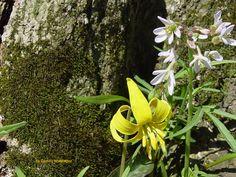 Spring Wildflowers #2