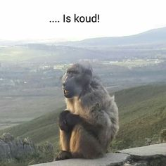 Funny Animal Jokes, Funny Animals, Afrikaans Quotes, Daily Thoughts, Laugh At Yourself, Animal Quotes, Good Morning Quotes, Brown Bear, Quotations