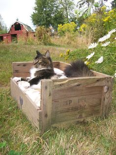 Upcycled Country Pet Bed from a Wooden Fruit Crate I love this! I want to make coco one of these! Pet Beds, Dog Bed, Deco Dyi, Diy Cat Bed, Dog Crate, Pet Crates, Animal Projects, Here Kitty Kitty, Trash To Treasure
