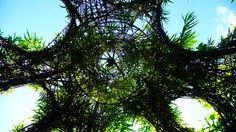 Afbeeldingsresultaat voor living willow structures
