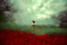Red and green flower Art - HD Wallpapers Lab Microscopic Photography, Time Lapse Photography, Trippy Wallpaper, Photo Effects, Green Flowers, Photography Women, Body Painting, Flower Art, Waves