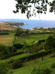Europes oldest working tea plantation on Sao Miguel, the Azores, Portugal