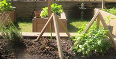 Adaptive Gardening blog. Pinned by Venture Community Services.