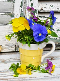 Deco flowers - A few colored deco ideas with flowers Today we want to write about decoration in our Yellow Cottage, Flowers Today, Beautiful Rose Flowers, Pansies, Garden Pots, Garden Inspiration, Flower Pots, Pansy Flower, Container Gardening