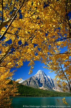 ✯ Banff National Park