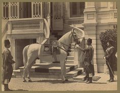 "1880'ler, II. Abdulhamit Han'ın Atı "" Asil ""  Asil, the horse of the Sultan Abdulhamit II 1880s"
