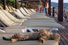 Un Chat en pleine extase ....... étalé sur le dos confortablement installé sur un transat
