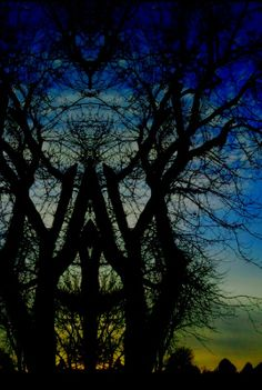 Faces In the Trees   Morphed a photo I had taken of trees at sunset.
