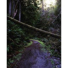 Caliparks : Van Damme State Park Van Damme, Park Photos, Park City, State Parks, California, Plants, Instagram, The California, Flora
