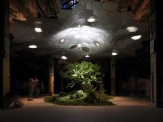 New York's Lowline Launch Campaign to Develop the World's First Subterranean Park