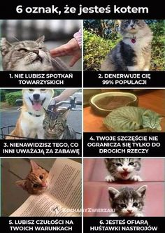 New meme compilation (cat memes,dog memes,pets memes,animal memes) Funny Animal Memes, Dog Memes, Funny Animal Pictures, Cute Funny Animals, Funny Cute, Cute Cats, Funny Memes, Funny Pics, Animal Pics