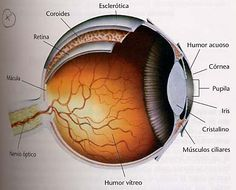 Descripción ojo humano Eye Anatomy, Solis, Physics, Science, Education, Ideas, Human Eye, Studying, Eyes