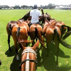 March across the field #polo #vamosorchardhill @internationalpoloclub