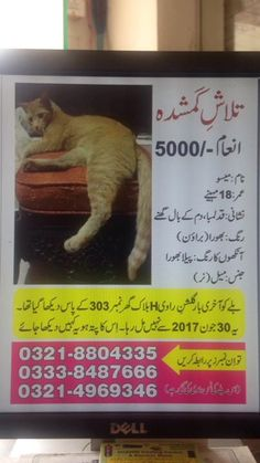 """Hello, Don't ignore me please please don't ignore me. Mere post Bohat Bohat Bohat lengthy hai but I request you admin I request mere humble request hai please share it as it is. Please aisay he share kar dein. This is  about """"May-Soo"""" my  Helpless lost cat who needs your help. Mere post Bohat lengthy hai please. iss ko aisay he share karein. And I want all the  members to read the whole post. Please all you readers Please please. My mother has fallen ill due to this loss. Mere post Bohat…"""