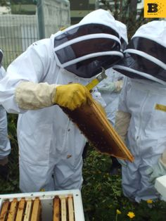 St.Ambrose and Buchanan High School - Plan Bee Ltd. Balfour Beatty has funded 2 beehives as well as beekeeping lessons for St.Ambrose and Buchanan High School and used Plan Bee's services. #honeybees #beekeeping