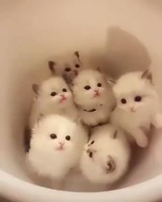 #Cats #Cat #Kittens #Kitten #Kitty #Pets #Pet #Meow #Moe #CuteCats #CuteCat #CuteKittens #CuteKitten #MeowMoe A bucket of cuteness ... http://www.meowmoe.com/69677/