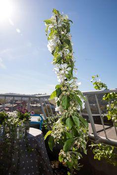 EPLER: Foreløpig er det bare blomster på dette søyleepletreet, men på sensommeren kan man sannsynligvis høste saftige epler.  (Foto: Håkon Mosvold Larsen / NTB scanpix)    FOTO:  /