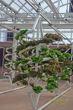 Υδροπονική καλλιέργεια, η επαναστατική μέθοδος καλλιέργειας χωρίς χώμα.