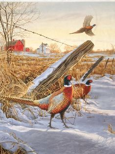 Since pheasant is a wild game bird, it will be more lean than other meat you are used to smoking. That is why we recommend using a brine to soak your chicken in a salty water mixture. Hunting Painting, Hunting Art, Coyote Hunting, Pheasant Hunting, Archery Hunting, Hunting Dogs, Turkey Hunting, Hunting Humor, Hunting Quotes