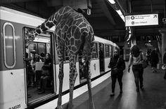 PHOTO : Quel animal êtes vous dans le métro?