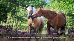 C'est en travaillant son cheval avec l'idée qu'il soit heureux, qu'on devient moins égoïste et plus généreux.