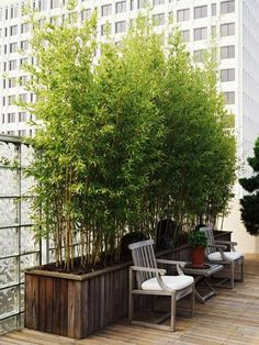 Balcony: Potted bamboo plants forprivacy | followpics.co