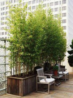 Balcony: Potted bamboo plants forprivacy | followpics.co