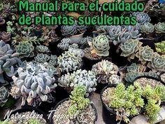 Naturaleza Tropical: Manual para el cultivo de orquídeas en casa