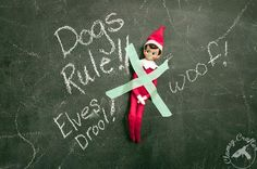 Elf on the Shelf idea - family dog catches Elf