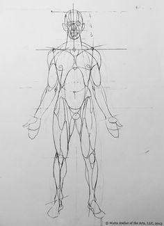 Reilly rhythms from Watts Human Figure Drawing, Figure Drawing Reference, Anatomy Reference, Art Reference Poses, Life Drawing, Anatomy Sketches, Anatomy Drawing, Art Sketches, Art Drawings