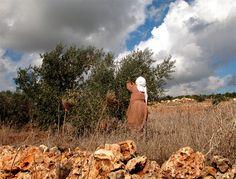 The Wind - Nablus area, West Bank Palestine, Bait, Olives, Israel, Weird, Childhood, Woman, Infancy, Women