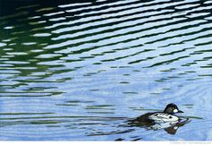 Beautiful print relief print- the reflection on the ripples is amazing. No Time Like the Present linocut Sherrie York Graphic Prints, Art Prints, Block Prints, Duck Art, Etching Prints, Lake Art, Indigenous Art, Japanese Prints, Linocut Prints