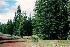 Lot 17 Block 21 Unit 1 is a great piece of mountain land that you can buy for only $125 a month!