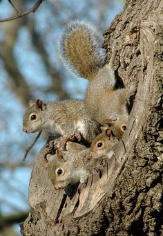 You guys can all hang out and watch that dog, I'm going in for a nap...(Feelin' Squirrely group board)
