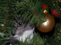 how to keep a cat away from an xmas tree - How To Keep Cats Away From Christmas Trees