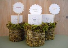 Upcycle soup cans into moss-covered gift holders filled with seed packets.