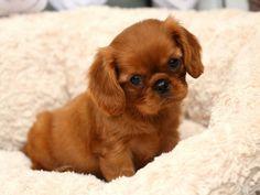 Ruby..precious!!