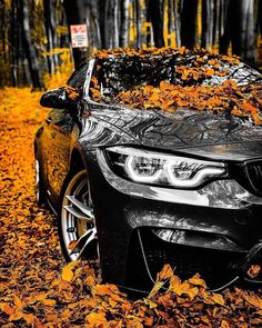 Beautiful Black-out BMW ready to cruise with this nice car? - - Beautiful Black-out BMW ready to cruise with this nice car? Beautiful … – Beautiful Black-out BMW ready to cruise with this nice car? Bmw M4, E60 Bmw, Mercedes Auto, Bmw Autos, Lamborghini Cars, Audi Cars, Ferrari Laferrari, Lamborghini Gallardo, Ford Mustang Wallpaper