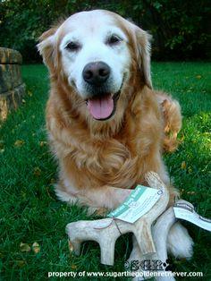 SugartheGoldenRetriever.com All Natural Antler Dog Bone product review