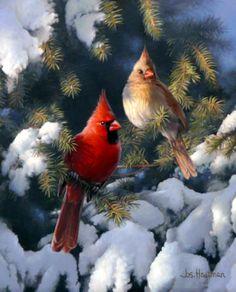 Pair of cardinals in winter pine by Joe Hautman.