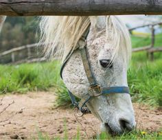 How much land does a horse need? Find out in this excerpt from Barnyard Kids by Dina Rudick. Livestock, Farming, Things To Come, Horses, Blog, Kids, Animals, Toddlers, Animales