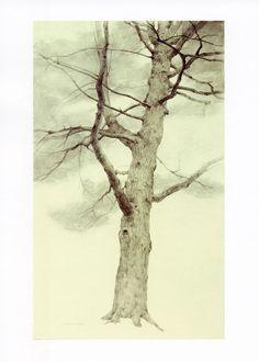 t allen loawson | White Pine |T. Allen Lawson