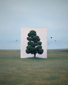 Tree species during different seasons and times of day framed and photographed by Korean Artist Myoung Ho Lee. Born in Myoung Ho Lee is a South Land Art, Art Conceptual, Photo Vintage, Photoshop, Korean Artist, Art Design, Art Plastique, Installation Art, Art Direction