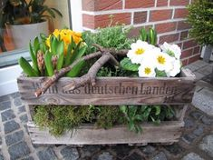 Sehe dir das Foto von Kunstfan mit dem Titel Bepflanzte Weinkiste und andere ins… See the photo of Kunstfan entitled Planted Wine Box and other inspirational images Spaaz. Container Plants, Container Gardening, Spring Decoration, Deco Floral, Garden Boxes, Flower Boxes, Spring Garden, Garden Inspiration, Seasonal Decor