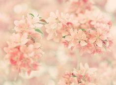 pink flowers tumblr - Google Search