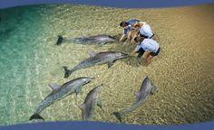 Tangalooma Resort Moreton Island Dolphin Hand Feeding