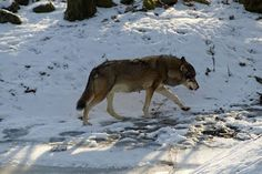 Panoramio - Photos by kuchipi Wolf
