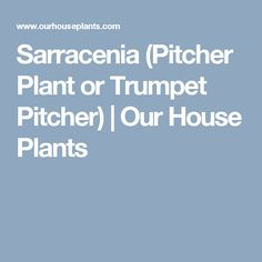 Sarracenia (Pitcher Plant or Trumpet Pitcher) | Our House Plants